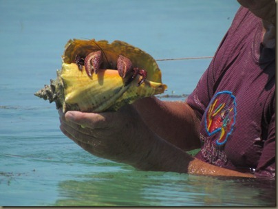 crab in conch shell with john, kayaking around sunshine key
