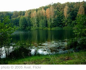 'Forest lake in summer' photo (c) 2005, Axel - license: http://creativecommons.org/licenses/by/2.0/