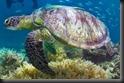 fitzroy-island-fitzroy-island_230520110524211272
