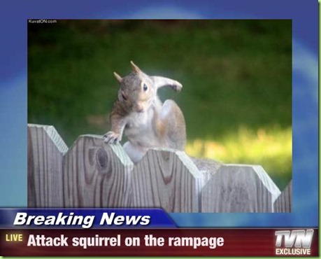 attack squirrel