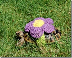 cosasdivertidas tortugas con ganchillo (10)