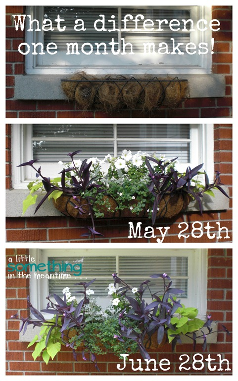 Garage Flowers One Month Wow