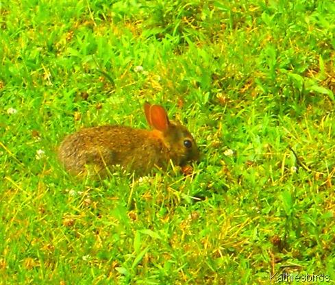 4. wee bunny-kab