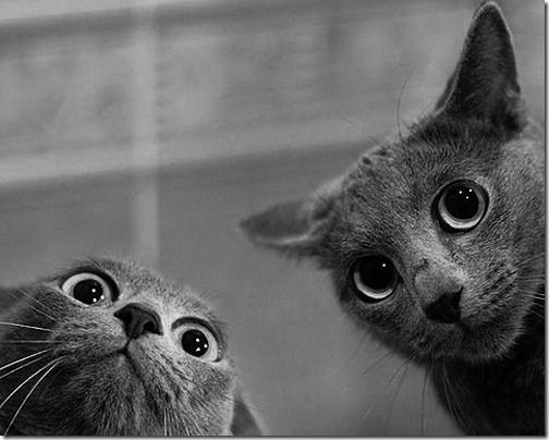 fotos de gatos con cara de loco