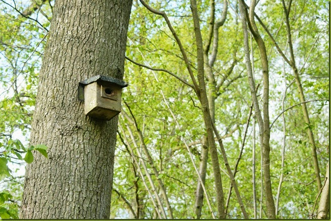 woodland birdbox