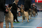 20130510-Bullmastiff-Worldcup-1155.jpg