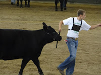 Riley Sieren of the Limecreek Livewires, son of Brian and Michele Sieren of Washington, showed the Champion Angus Heifer at the Iowa State Fair in the 4-H show.  Photo courtesy:  Washington County Extension.