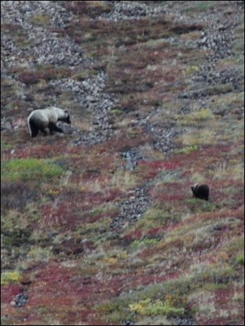 2013_08_Alaska 1015