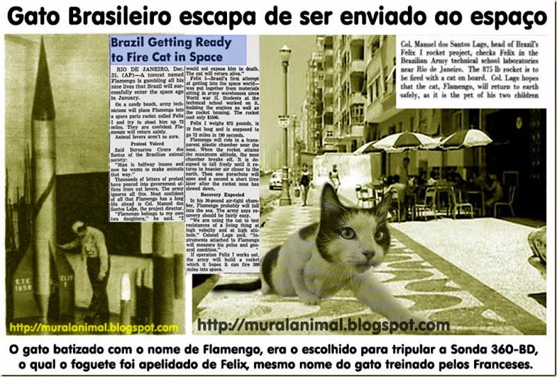 brazil_cat_space