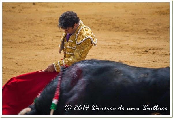 Toros 2014 (2)-20
