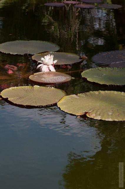 52. Последний пункт нашей экскурсии ботанический сад какого-то короля.