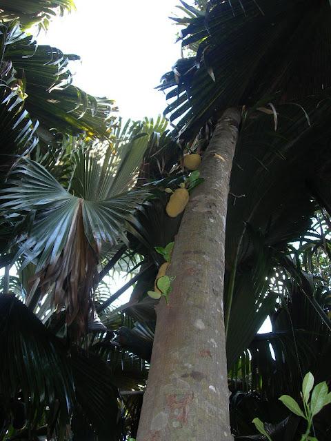 seychelles8_20070412_1494700551.jpg