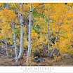 AspenGroveYellowBishopCreekSouthFork20101002.jpg