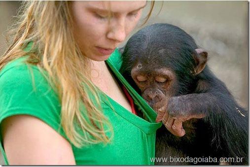 planeta-dos-macacos-a-origem