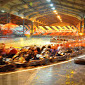 Indoor Go Karting Open Team Race Near London