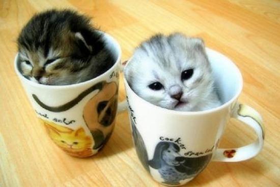 cute-kittens-cups