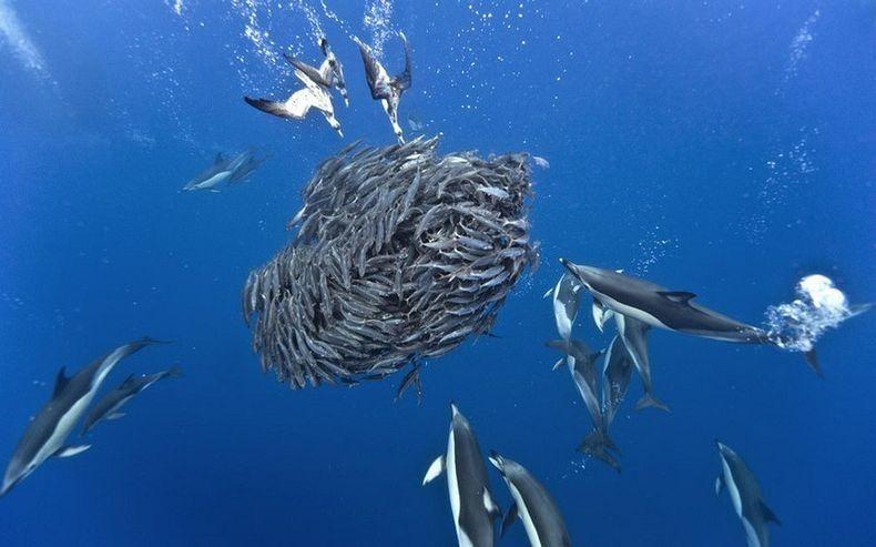 shark-and-mackerel-0