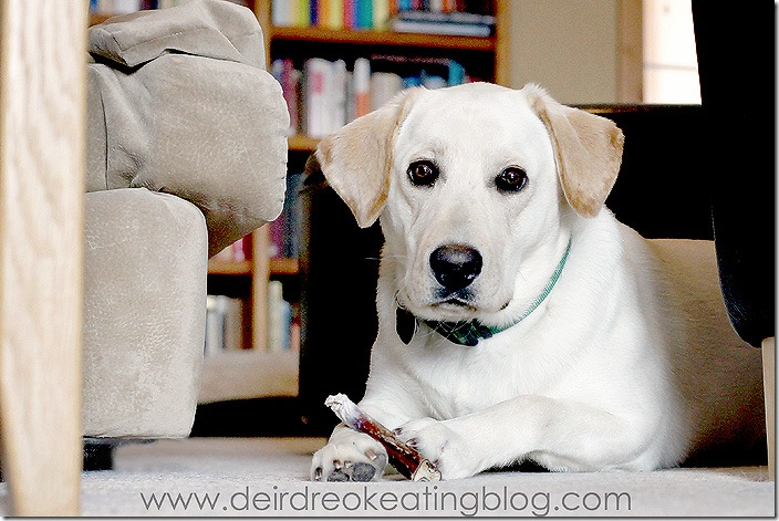 Duke the dog by Deirdre O. Keating Photography
