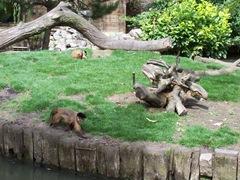 2011.08.07-025 capucins