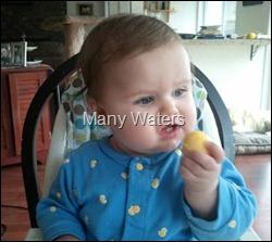 egg yolk 1