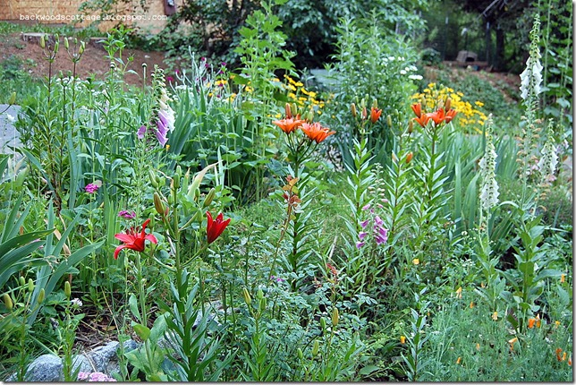 roseoflilies