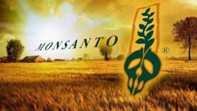 Νόμιμη η καλλιέργεια καλαμποκιού της Monsanto!