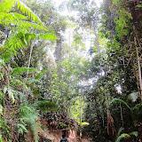 写真1 Anap-Muput森林管理区の伐採直後の森林:伐採中にもかかわらずヒゲイノシシ、ホエジカ、各種シベット、ブタオザルなど様々な種の哺乳類が生息していることが明らかになった。 / Photo1 Forest in Anap-Muput Forest Management Unit shortly after logging operations: various mammals inhabit the forest while logging operations underway.