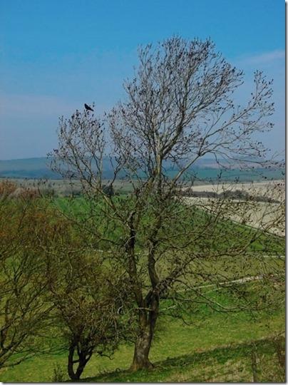 Cissbury Bird-small