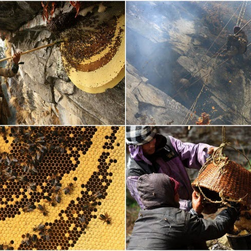 The Honey Hunters of Nepal
