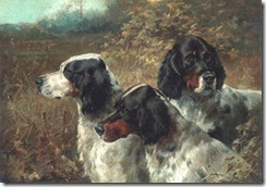 three english setters