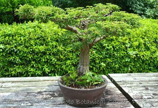 Glória Ishizaka -   Kyoto Botanical Garden 2012 - 46