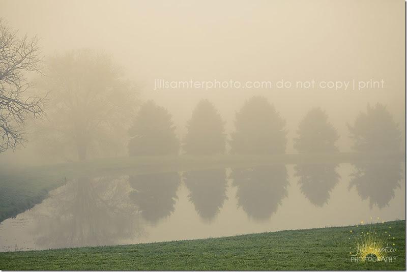 fog-5431