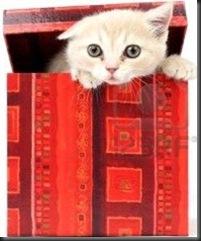 #CUMPLEAÑOS FELIZ#CUMPLEAÑOS FELIZ# TE DESEAMOS A TI# 8415789-gato-en-caja-de-regalo-aislado-en-fondo-blanco_thumb