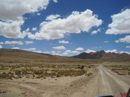 A typical view during the first day, with roadside llamas.