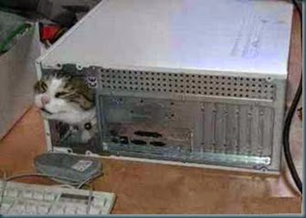 funny-cat-in-computer-picture[1]