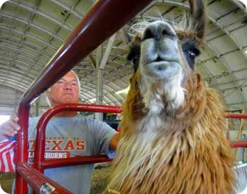 llama-and-paul