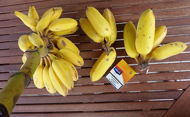 bananen_1_02