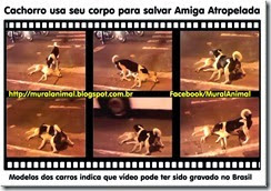 cachorro-usa-corpo_thumb[1][4]