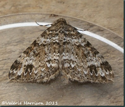 twin-spot-carpet-wigtownshire