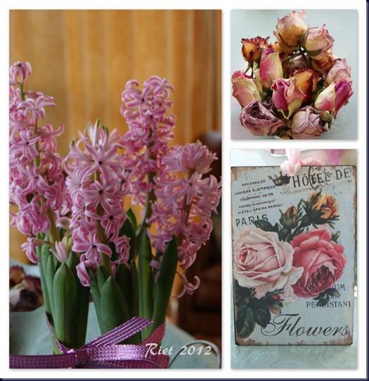roze droge rozen1