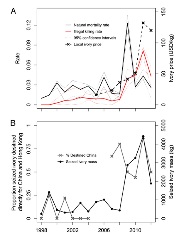 (A) Estimated natural (gray line) and illegal killing (red line) rates (with 95% confidence interval) contrasted with local prices of ivory (black line) to the poachers in the Laikipia/Samburu ecosystem. (B) Mass of annual ivory seizures in Kenya (no data in 2005–2006) and the proportion of seizures destined for China (including Hong Kong). Data is represented by a black or gray '×.' Graphic: Wittemyer, et al., 2014