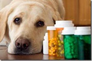Farmaci  durante la gravidanza della cagna e della gatta