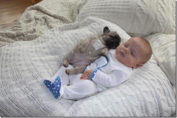 baby-bulldog-puppies-6