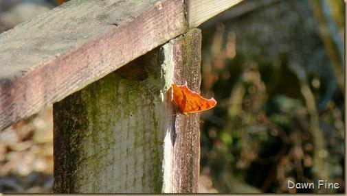 Beidler Forest_072