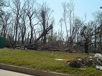 Dead trees in New Orleans, Louisiana, March 2006. Vickie Dihn