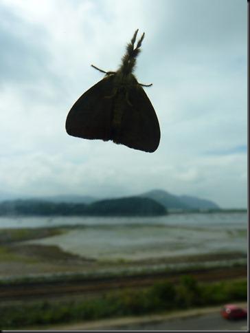 moths 001