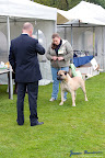 20100513-Bullmastiff-Clubmatch_31090.jpg