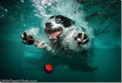 Cool Pictures of Dogs Playing Underwater with Ball