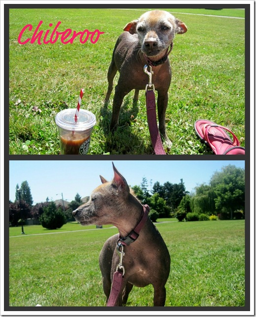 Chiberoo_collage