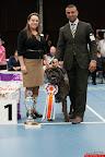 20130510-Bullmastiff-Worldcup-1244.jpg